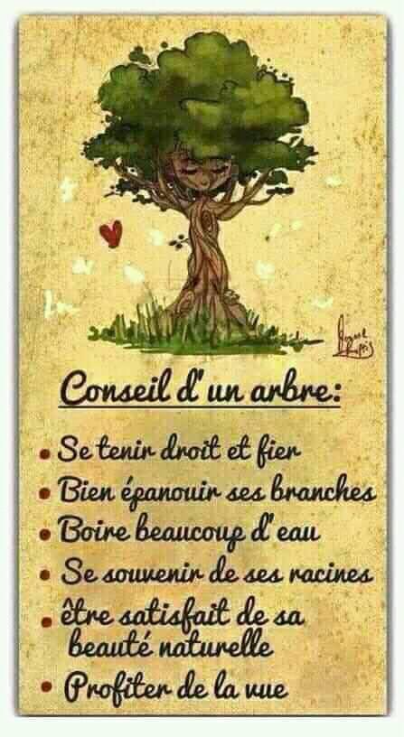 Nature : les conseils d'un arbre
